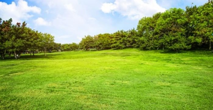 Campo Bosque Verde