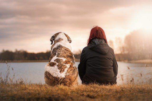 perro y amigo