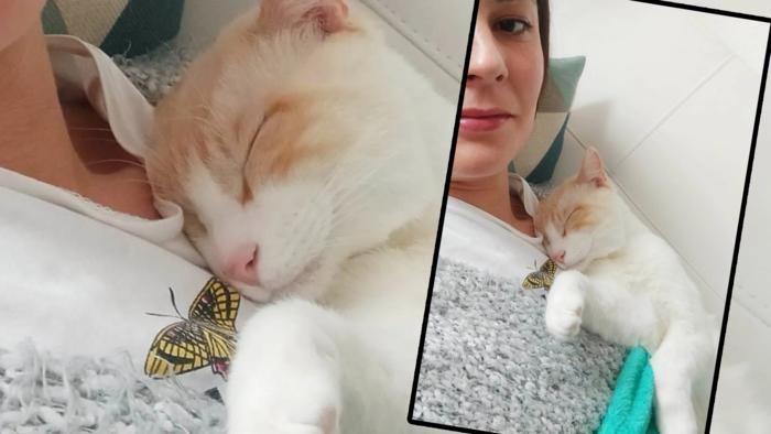 Ganadores Concurso Gato Moni y Macareno