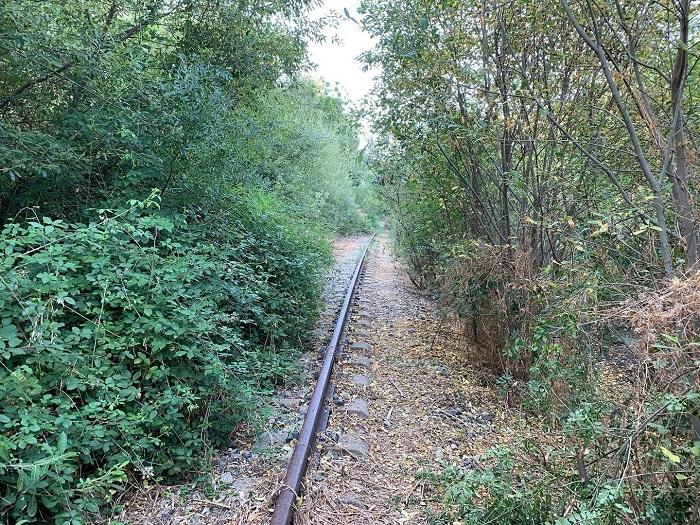 Ausencia de mantenimiento en la línea Burgos- Madrid
