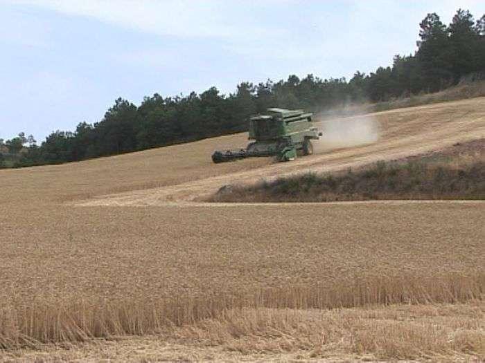 Cosechadora, cosecha, campo, trigo_opt