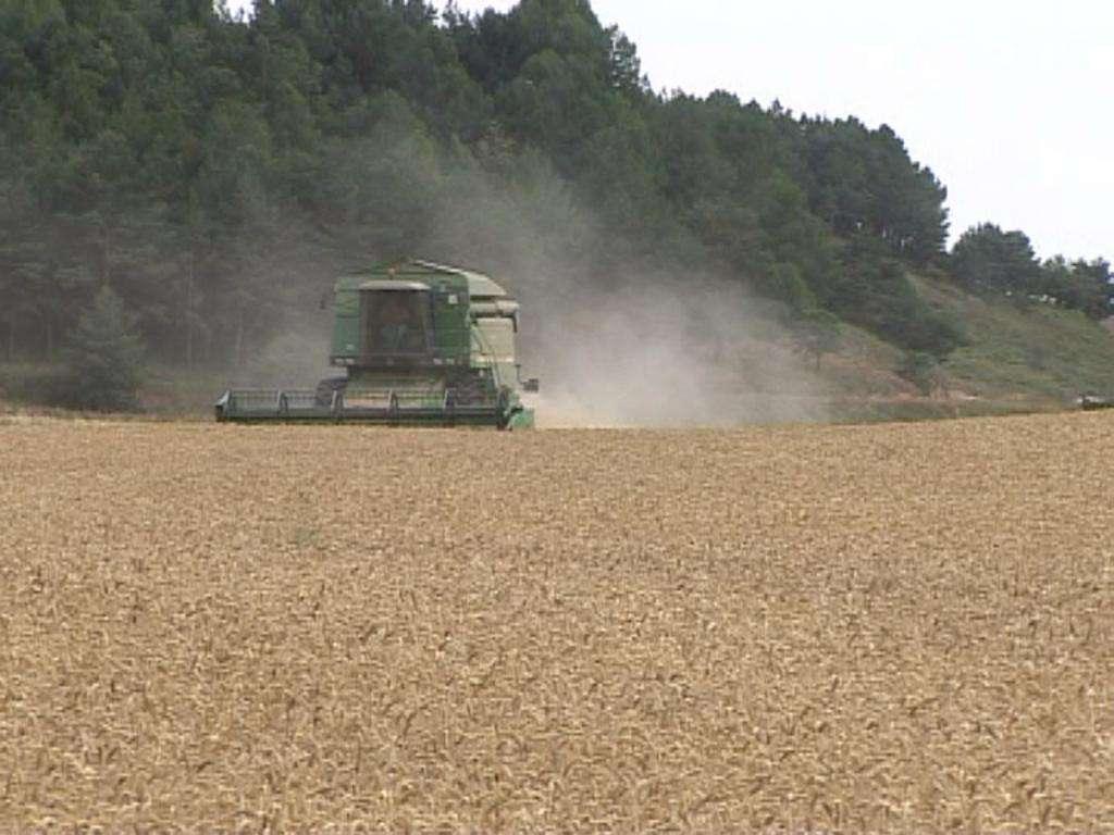 cosechadora,campo,trigo
