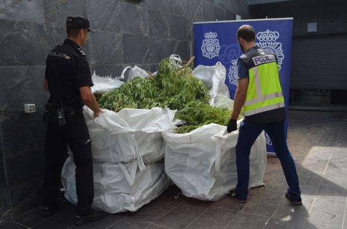 Marihuana incautada en Miranda de Ebro